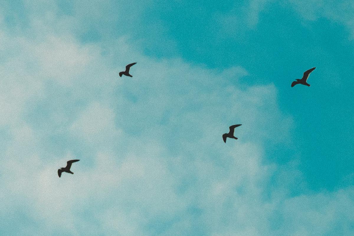 blog_bird_01
