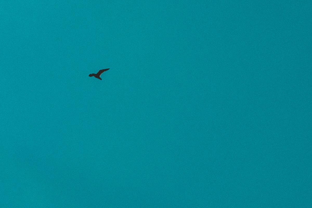 blog_bird_03