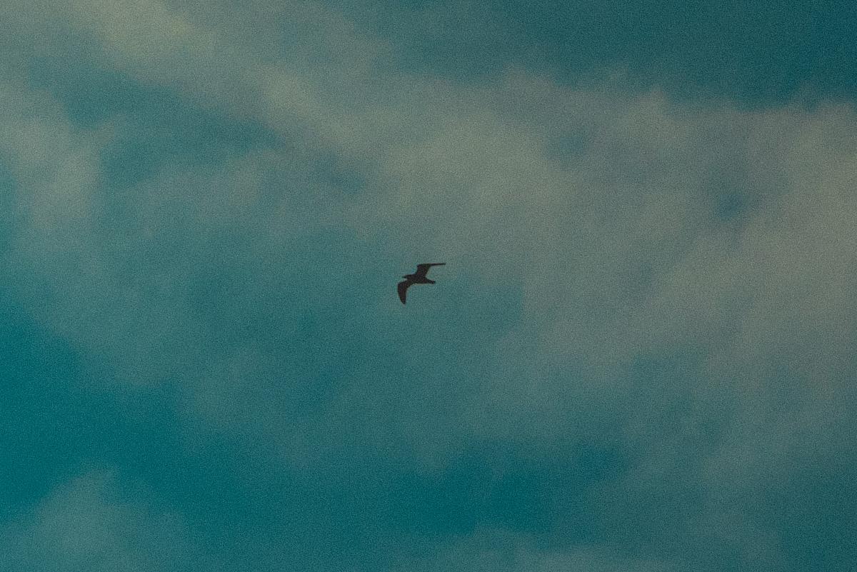 blog_bird_08