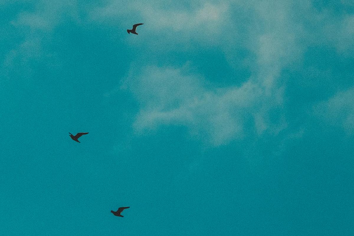 blog_bird_12