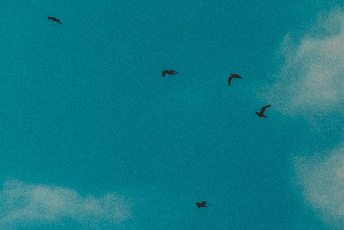 blog_bird_14