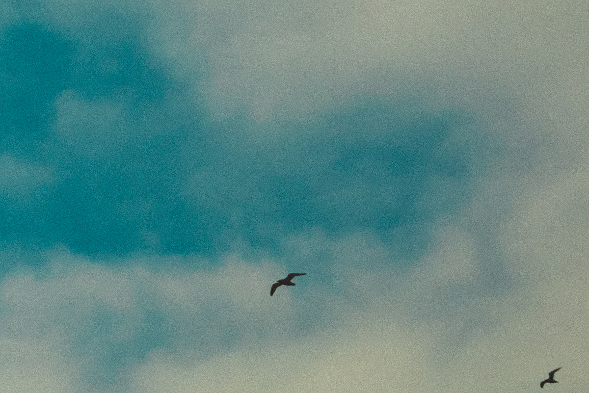 blog_bird_16